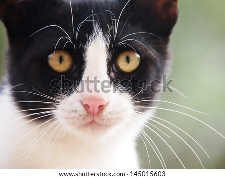 young cat, black and white,  19 close-up, front view