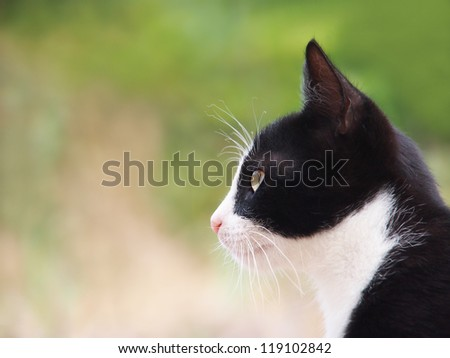 young cat, black and white, 12, close-up, side view