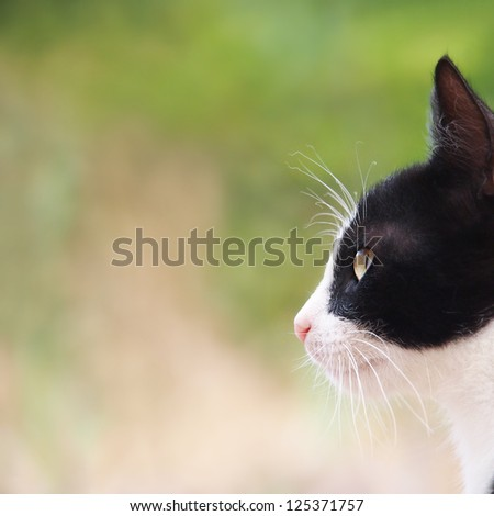 young cat, black and white, close-up, side view , square