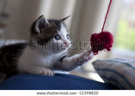 young cat catches wool ball
