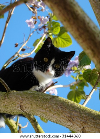 young cat climbing a blossoming tree