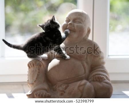 young cat climbs on Buddhafigur