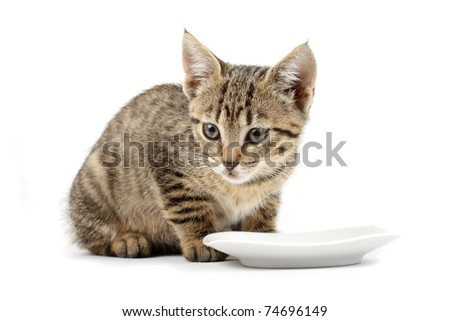 Young cat eating, cat with food cup, white background
