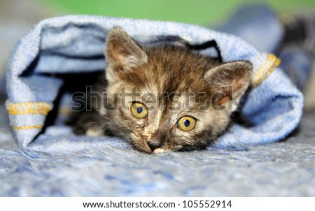 Young cat hiding in trousers