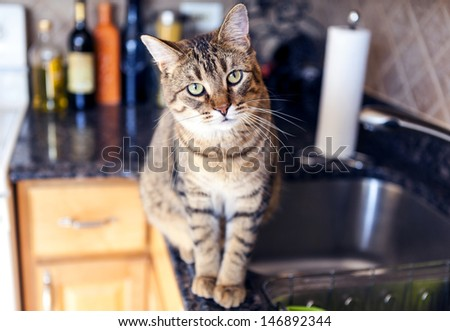 Young Cat In The Kitchen