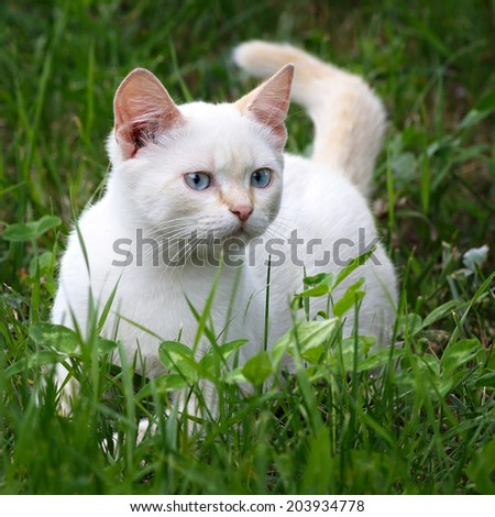 Young cat playing in green grass at park.