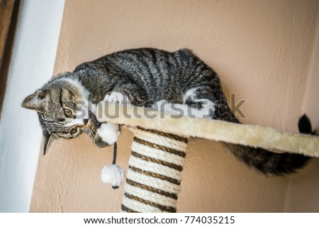 young cat plays with a toy mouse