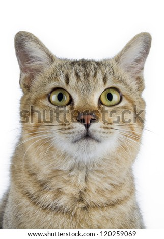 Young cat portrait on white background