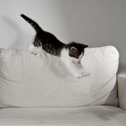 young cat raves on white sofa