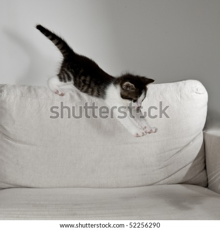 young cat raves on white sofa - stock photo