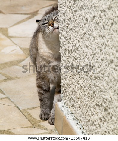 young cat scratching against a cornered wall