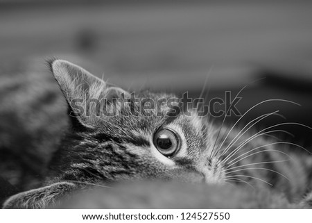 Young cat watchful, wishing to play. Sharp. Black and white