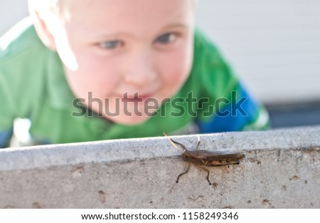 Young Caucasian Boy Child Looks At Grasshopper Bug Insect With Wonder And Curiosity