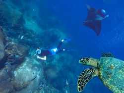 Young caucasian man free diver taking picture of a sea turtle, giant manta ray and tropical fish with an action camera gopro deep underwater. Coral reef, Maldives island. Copy space.