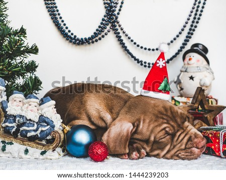 Young, charming puppy and bright Christmas decorations. Close-up, white isolated background. Studio photo. Concept of care, education, training and raising of animals
