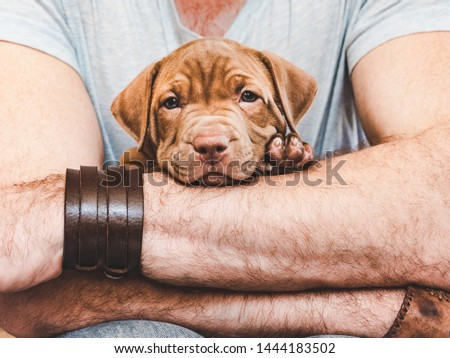 Young, charming puppy in the hands of a caring owner. Close-up, white isolated background. Studio photo. Concept of care, education, training and raising of animals