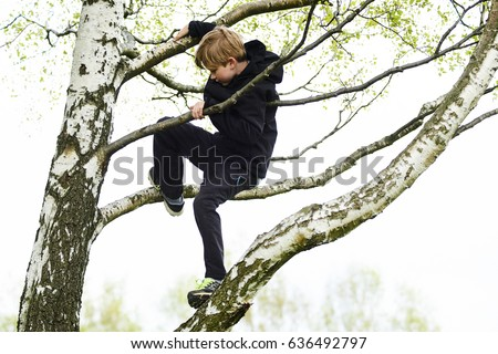 Young child blond boy climbing tree