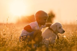 Young Child Boy Training Golden Retriever Puppy Dog Looking Right