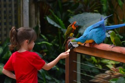 Young child (girl age 5-6) feeding a Blue-and-yellow macaw a native bird to central America and South America. Real people. Copy space