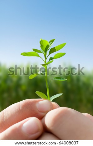 Young child holding a seedling plant
