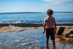 Young child with a net catching a crab in a tidal pool at Acadia National Park in Maine