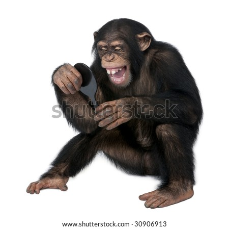 Young Chimpanzee looking at himself in a mirror in front of a white background