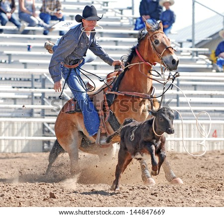 Calf Roping Horse After Roping a Calf