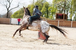 Young cowgirl riding a beautiful paint horse in a barrel racing event at a rodeo in Mitrov, Czech republic