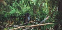 Young crow sit at nature, animals bird life