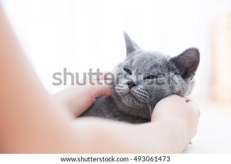 young cute cat enjoys having...