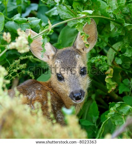 Young deer under cover