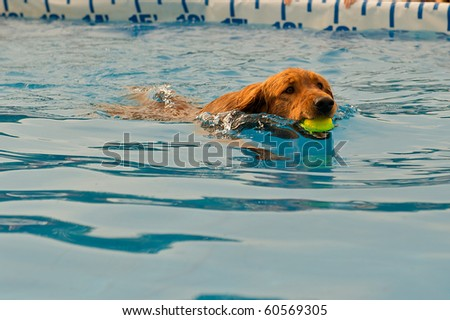 Young dog fetching a ball in the water.
