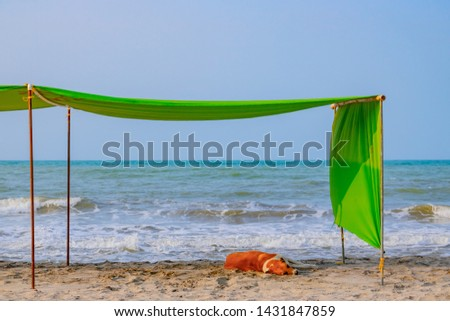 young dog is sleeping on the beach by the sea under green parasol Сток-фото ©