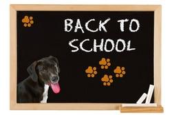 Young dog on blackboard - back to school