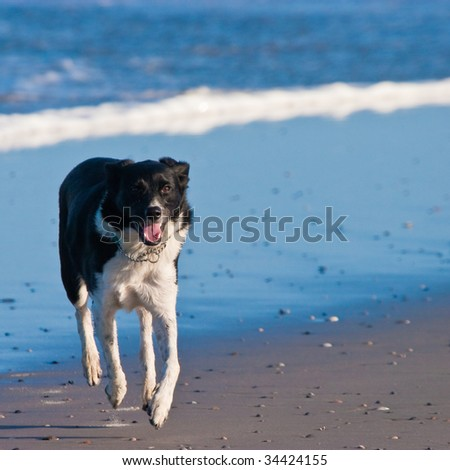 Young dog running on the beach near the waves
