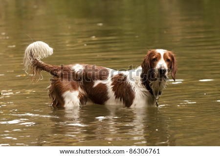 Young dog watching from the water
