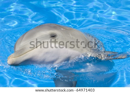 Young dolphin looking at the camera
