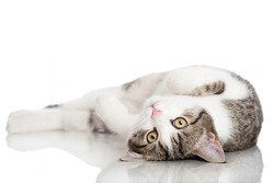 Young domestic cat isolated on white