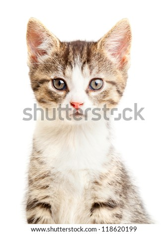 Young domestic kitten portrait over white background