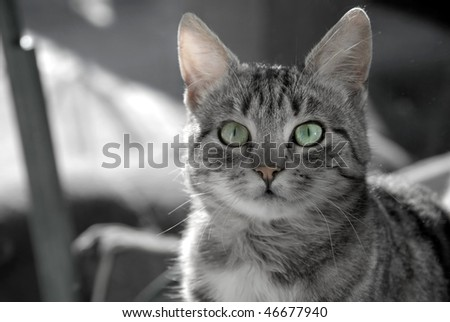 black and white cats with green eyes. gray cat with green eyes