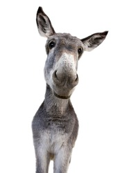 Young donkey looking at camera with tenderness
