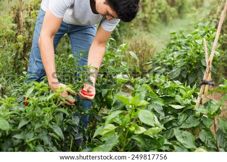 Young farmer checking the vegetables.