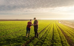 Young farmers examing  planted wheat in the fields