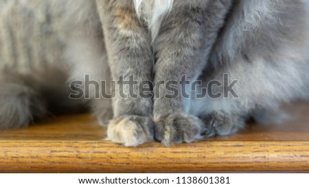 Young Feline Paws on Wooden Staircase #1138601381