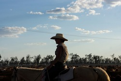 Young female drover with her herd of cattle on a stockroute silhouetted against the late afternoon sky in Queensland, Australia.