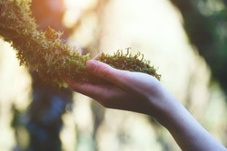 young female hand touching old moss tree, protect nature, green eco-friendly lifestyle, sunny morning, copy space, environment concept