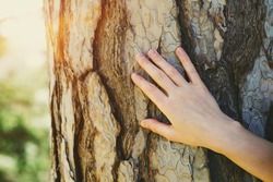 young female hand touching old tree bark at sunrise in summer forest, protect nature, green eco-friendly lifestyle, sunny morning, copy space