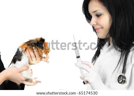 Young female veterinarian with syringe in her hand ready to give a shot