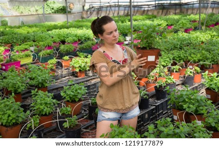 Young female worker arranging peppermint while gardening in greenhouse  #1219177879