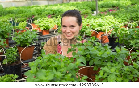 Young female worker arranging peppermint while gardening in greenhouse  #1293735613